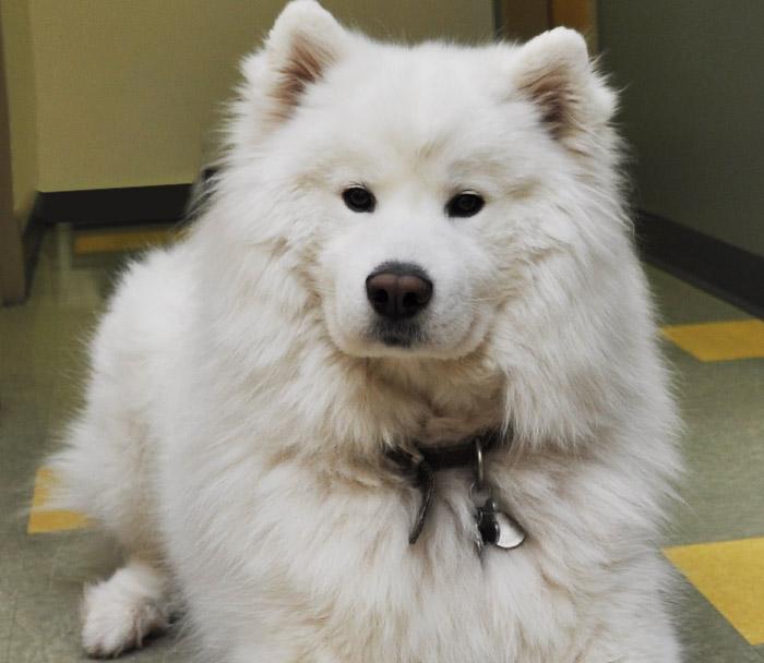 canine-health-care