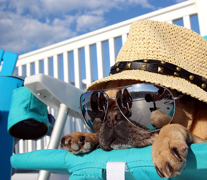 Pet Veterinary Care Lake Worth FL