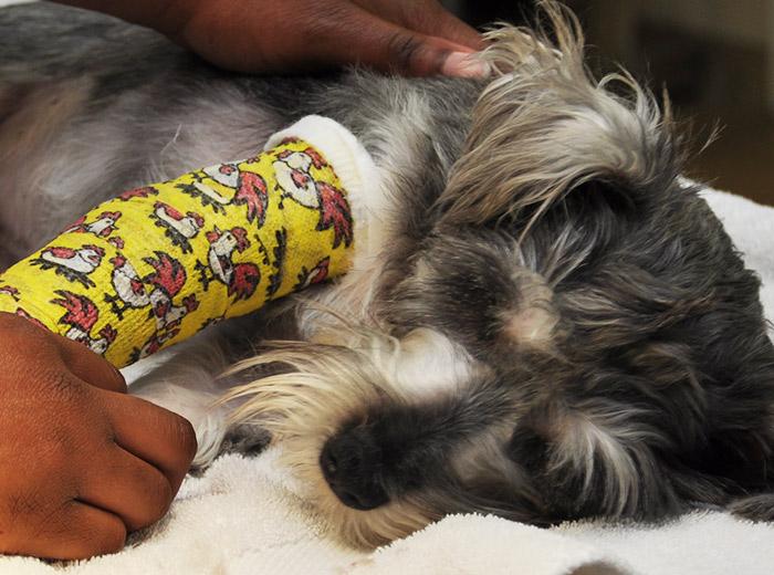 emergency-pet-care