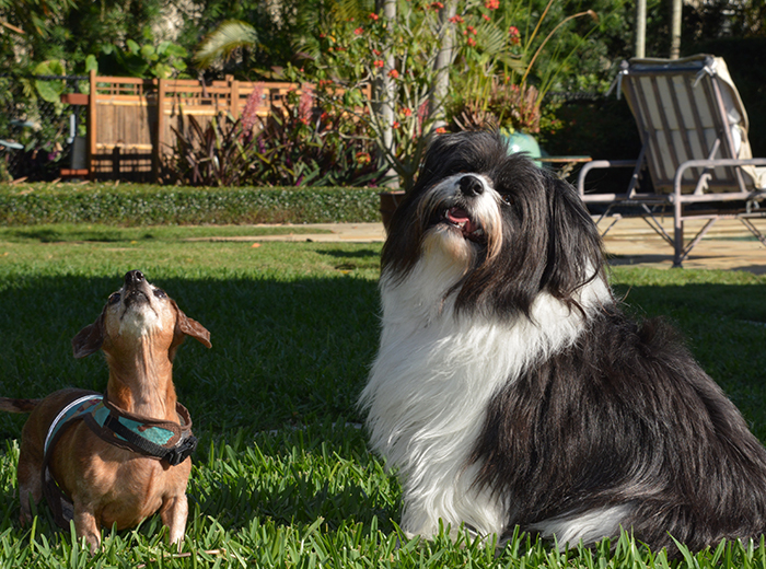 Pet Boarding in Lake Worth Florida