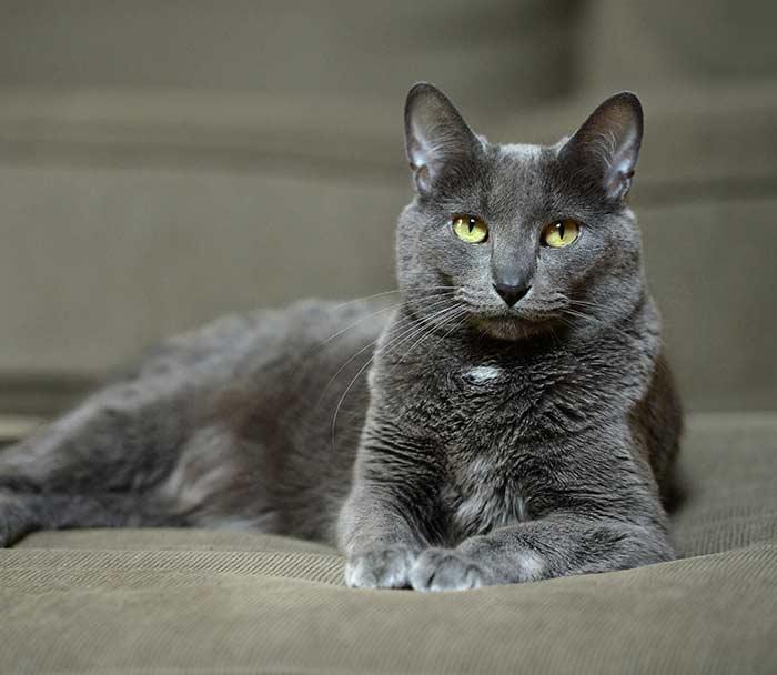 Cat Veterinary Care Lake Worth FL