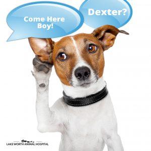 Dog Deafness - Lake Worth Animal Hospital