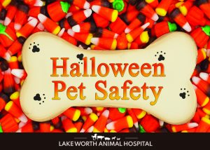 Lake Worth Animal Hospital - Halloween Pet Safety